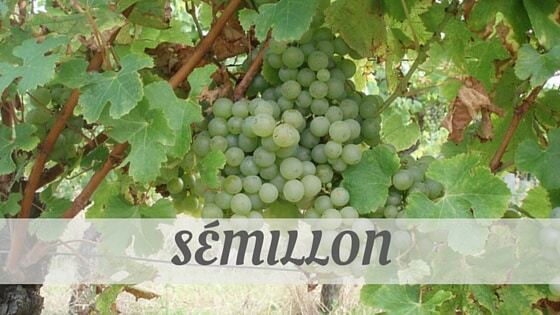 How To Say Sémillon?