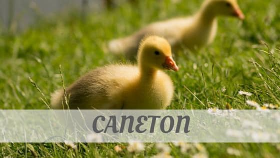 How Do You Pronounce Caneton?