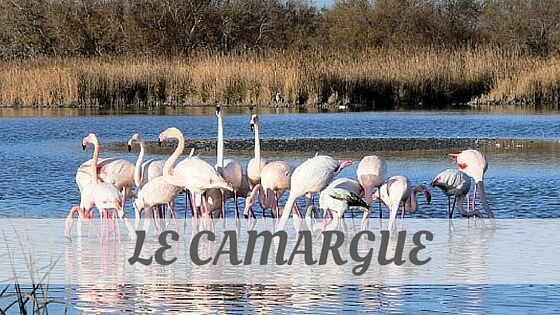 How Do You Pronounce Le Camargue?