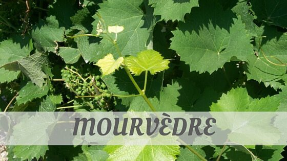 How Do You Pronounce How To Say Mourvèdre?