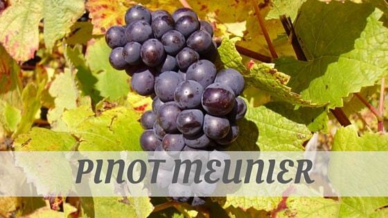 How Do You Pronounce How To Say Pinot Meunier?