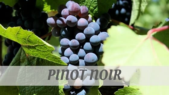 How Do You Pronounce Pinot Noir?