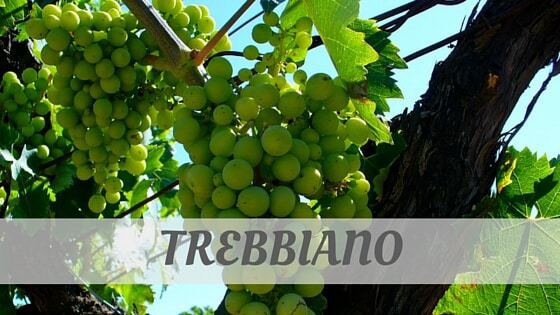 How Do You Pronounce How To Say Trebbiano?