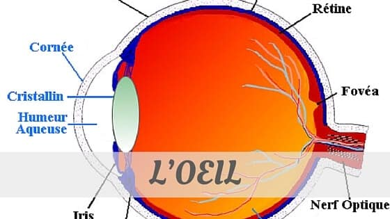 How To Say L'Oeil