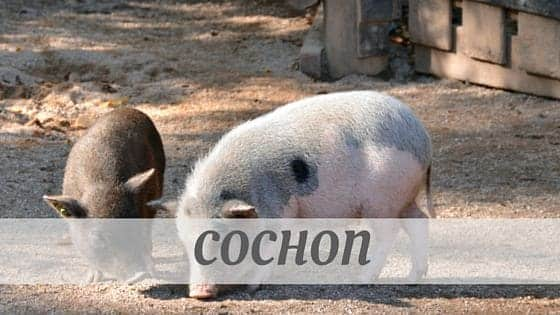 How To Say Cochon?