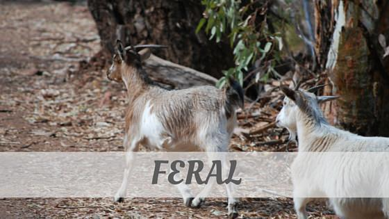 How To Say Feral