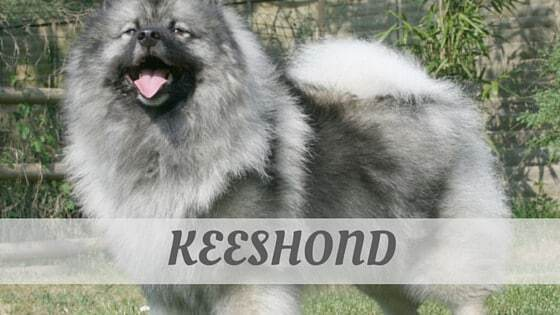 How To Say Keeshond