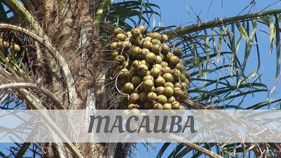 How To Say Macauba