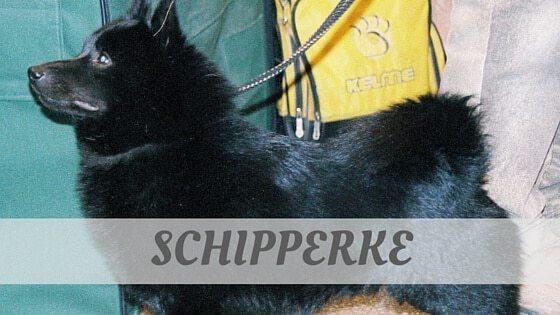 How To Say Schipperke