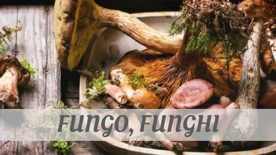 Fungo, Funghi