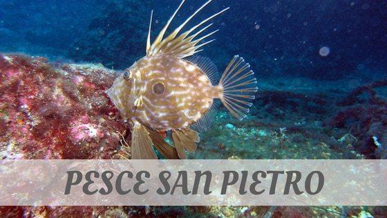 How To Say Pesce San Pietro