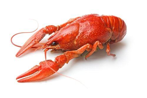 a la joinville crayfish