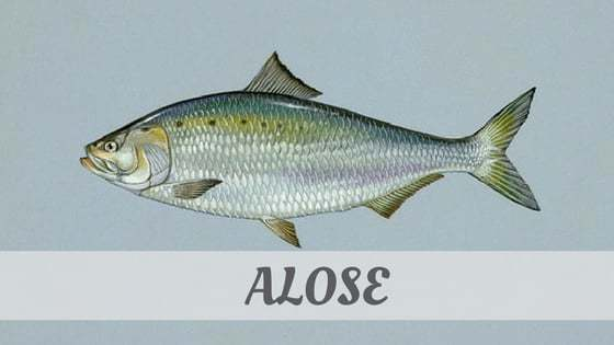 How To Say Alose