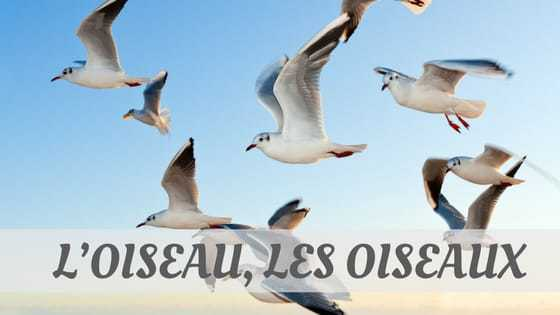 How To Say L'Oiseau